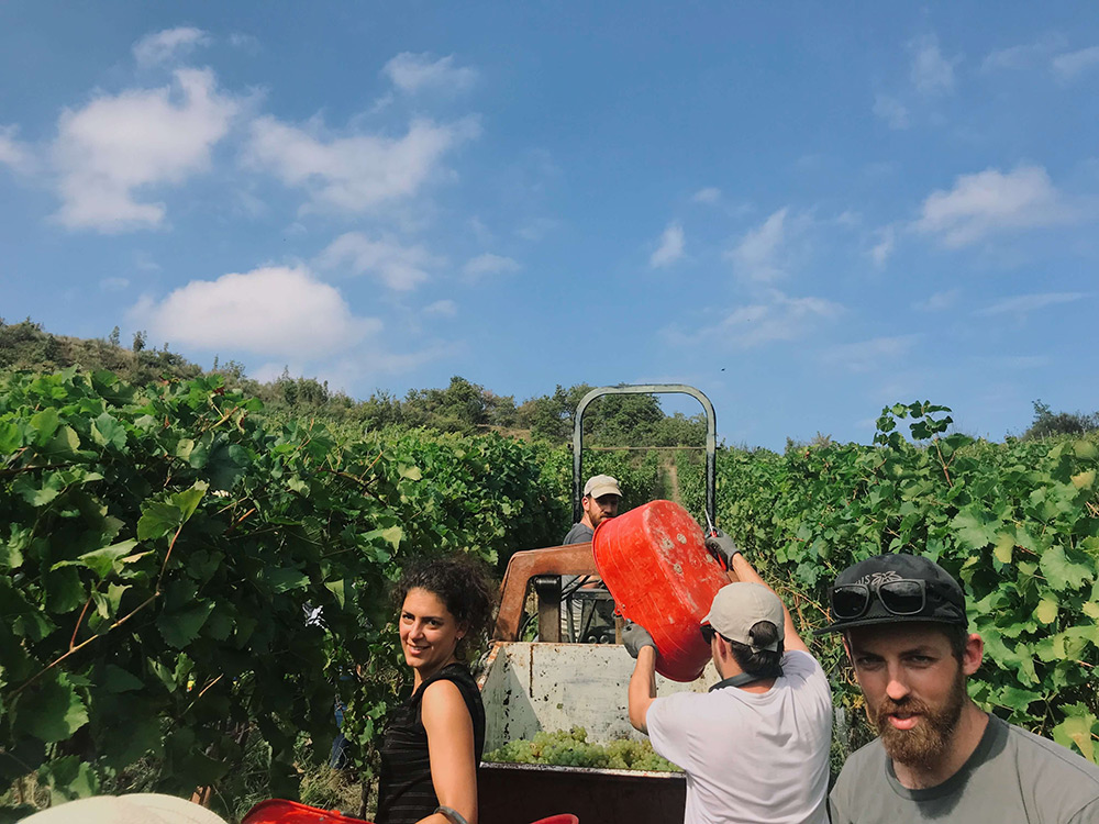 Winemaking in Italy vineyard Piemonte